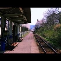 ◆【桜の咲花駅】