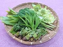 贅沢!春の山の恵み「山菜」名人が採ります