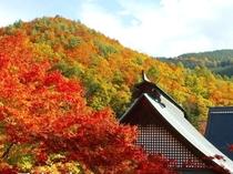 霊松寺(レイショウジ)オハツキイチョウの紅葉 当館よりお車約25分
