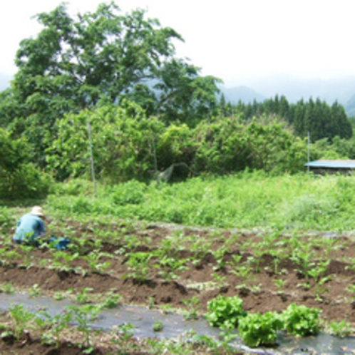*【施設】料理には、自家農園で栽培した無農薬の野菜を使っています。