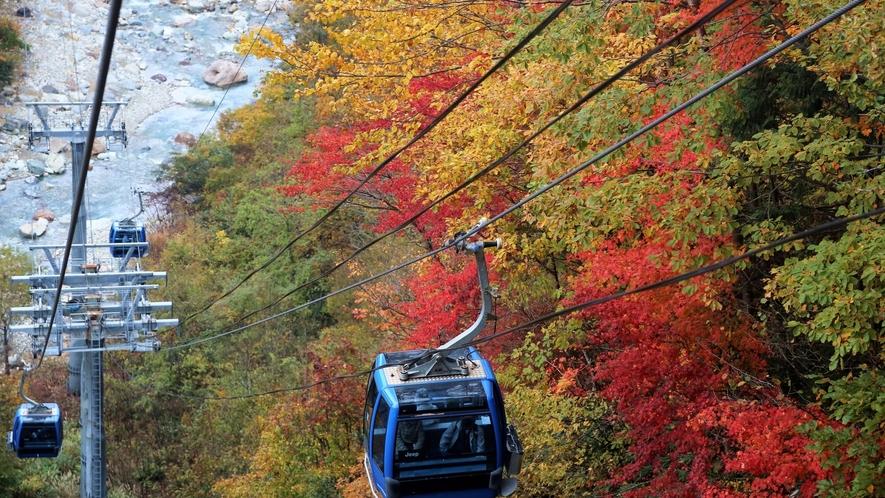 *【ドラゴンドラ】秋ならではの紅葉の大パノラマに感動!高低差のあるコースはスリル満点◎