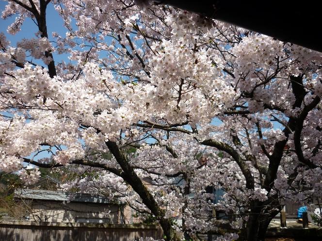 桜回廊から望む