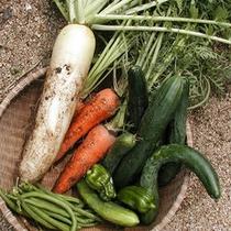 自家農園で育てた野菜達