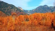 **【戦場ヶ原】かつての湖が湿原化したもの。秋には一面の草木が色づき、ハイキングコースも楽しめます。