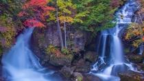 **【竜頭の滝】中禅寺湖へと注ぎ流れ落ちる滝。色鮮やかな紅葉が取り囲む眺めは写真に収めたい絶景!