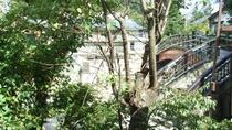 *【お部屋からの眺め】湯西川はすぐそこ。