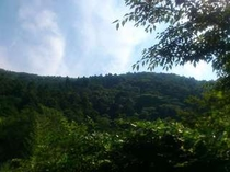 7月!庭から撮影した初夏の空。2