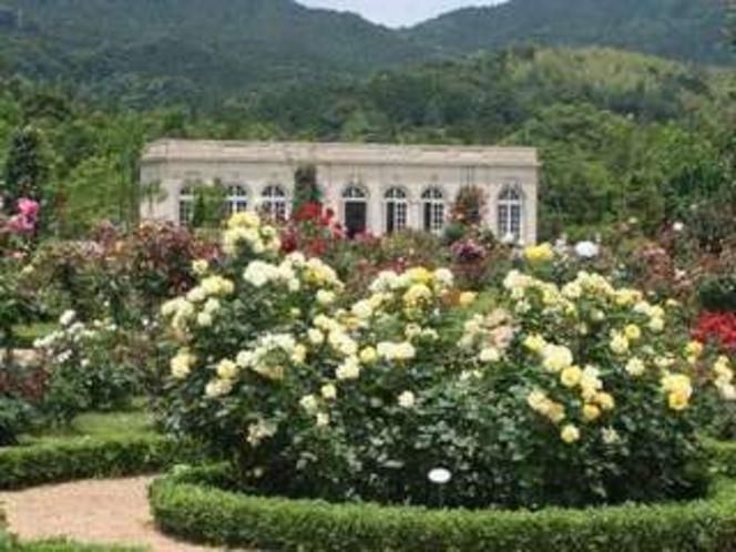 河津バガテル公園のバラは春と秋が見ごろ。