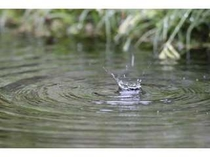 庭の池。自然いっぱいの当館をお楽しみください。