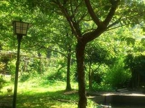 緑がとてもきれいな庭。