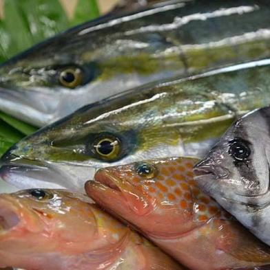 【迷ったらコレ!】氷見港直送♪きときと魚と蟹しゃぶしゃぶが味わえるWグルメプラン!旬魚食通