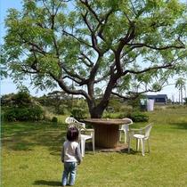 庭の樹の前で