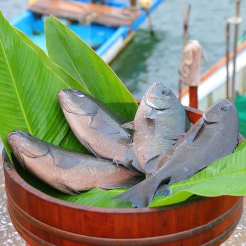 【料理】新鮮な魚介を鮮度抜群のまま調理いたします!