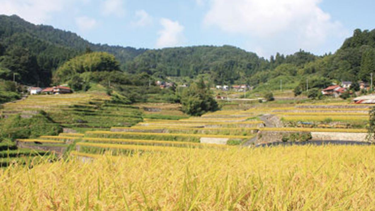 【井仁の棚田】平成11年(1999)7月26日に広島県から唯一、農林水産省の棚田百選に選ばれました。