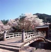 春のお城山