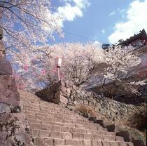 春のお城山その2