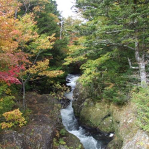 *【周辺(紅葉)】日光国立公園のお膝元!人気の紅葉スポットもございます。