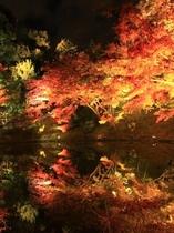 高台寺ライトアップ 紅葉