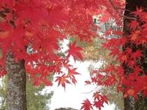 宿から徒歩2分の龍泉寺の紅葉。例年10月下旬から11月初旬が見ごろ