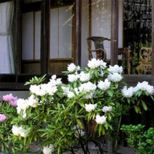 お部屋から石楠花が見えることも。