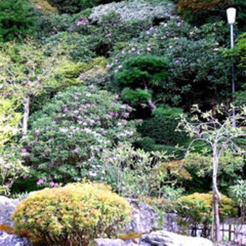 春〜初夏にかけて石楠花が見ごろです。