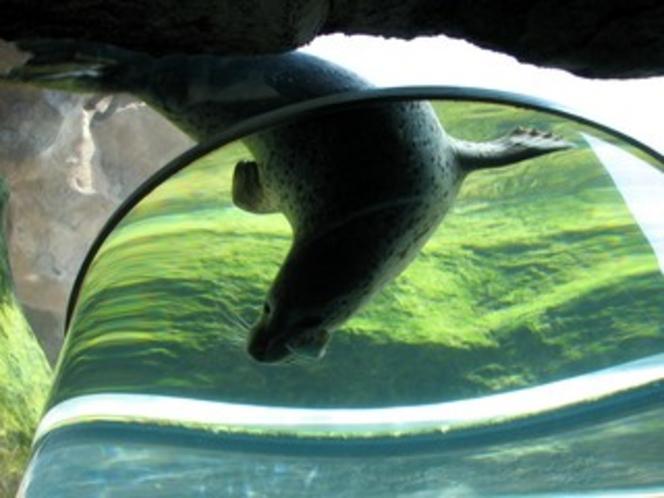旭山動物園(あざらし)
