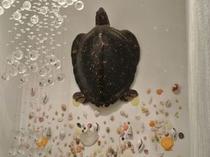 【館内】大きなウミガメと貝殻のマリンアート。館内のある場所で見られます♪