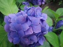 【6月】日本原種の種類が日本一!四季の花公園は車で8分☆