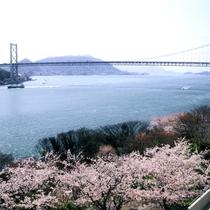 【桜】当館の正面玄関を出てすぐの所に、関門海峡と桜をお楽しみいただけるスポットがあります♪