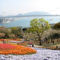 【トルコチューリップ園】桜の開花時期にはチューリップの組み合わせも楽しめます!(当館より徒歩約7分)