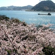 【火の山公園】関門海峡の景色と一緒に桜をお楽しみください♪(当館より徒歩約2分)