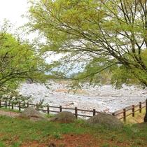 *周辺/目の前流れる川のせせらぎを聞きながら自然を感じるひと時。