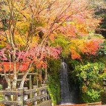 *周辺景色/紅葉になると大山周辺が美しく色づきます。
