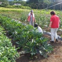 *【シェーヌファーム】スタッフ一度丹精込めて美味しい野菜を作ってます!(イメージ)