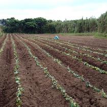 【はぴすまふぁ~む】野菜やお米を育てています