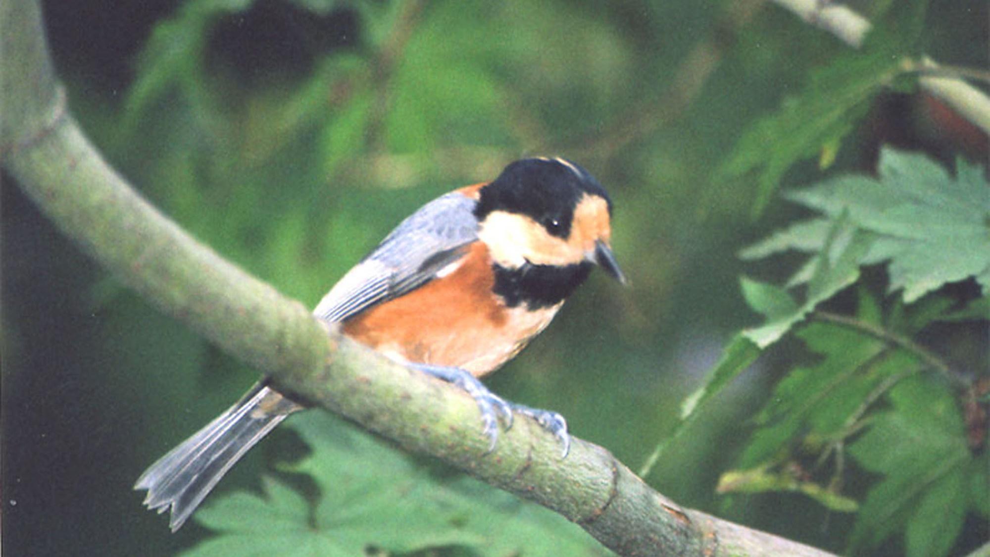 *宿周辺/山の中腹に佇む当館の周りでは、時にはこんな鳥の姿も見られます。