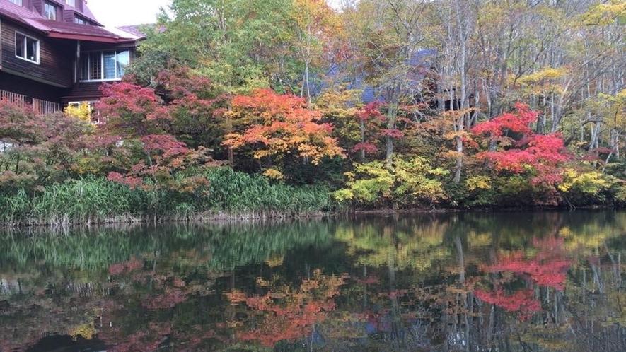 *【周辺】紅や黄色に染まった木々が水面に映り、より一層鮮やかさを感じさせてくれます。