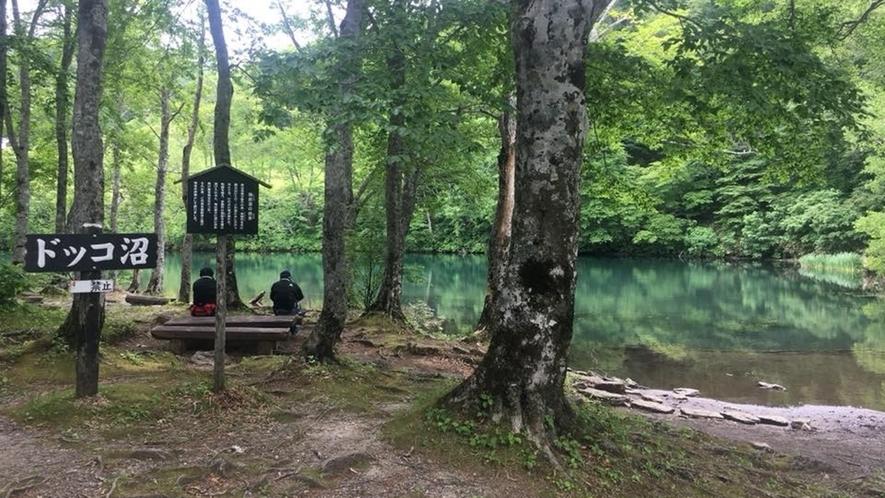*【周辺】ドッコ沼。水がきれいに澄んでいて、木々を美しく映し出します。