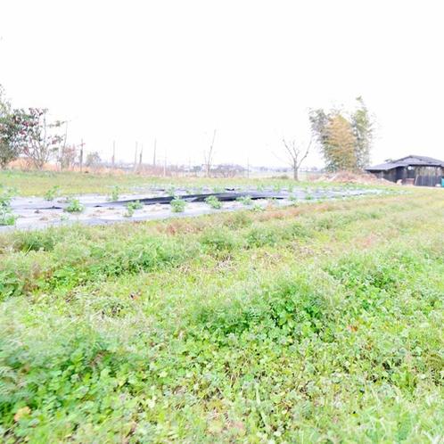 *【自家農園】敷地内には自家農園があり、こちらで採れる無農薬野菜もお食事に並びます。