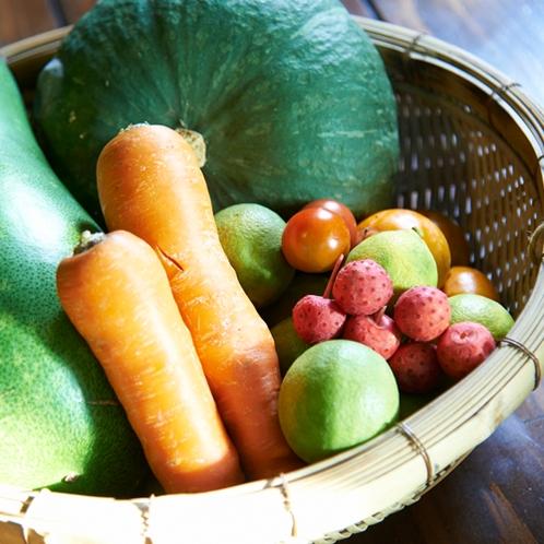 採れたて野菜(夏季)