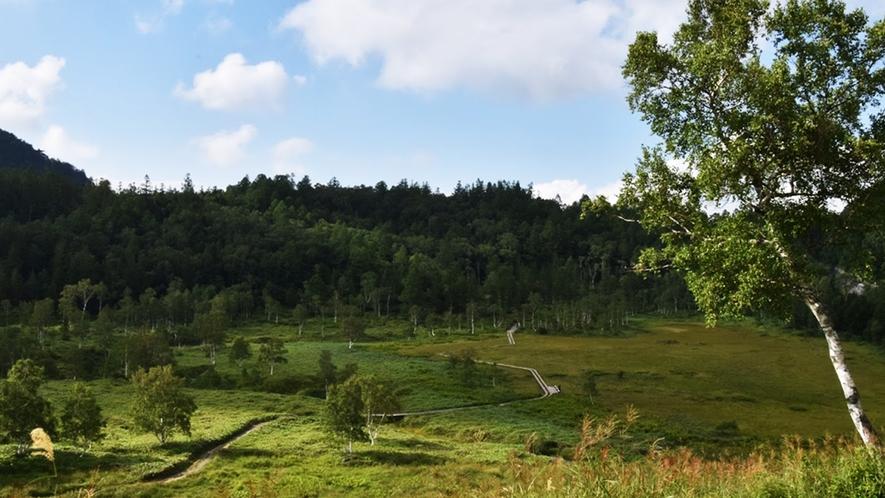 *【周辺/四十八池】高山植物が群生している志賀高原の代表的な高層湿原です。