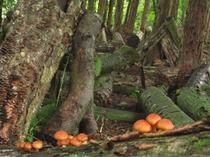 精進の原木きのこ