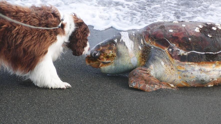 *ペットと宿泊OK/海ではこんな、驚きの出会いが待っているかも?!