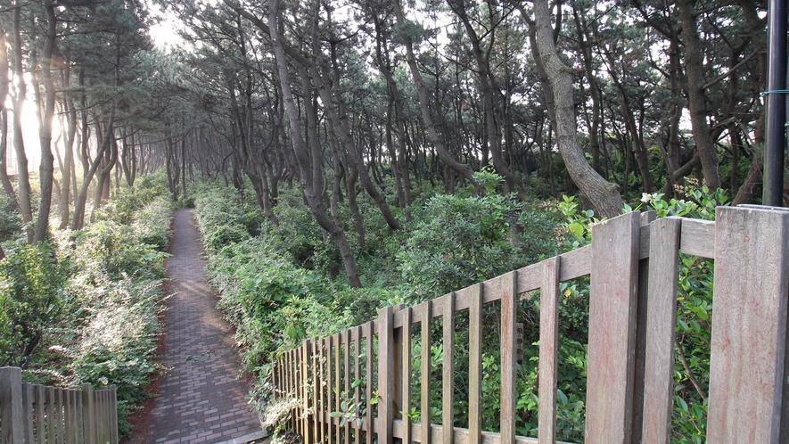 *平塚海岸への遊歩道/ウッドデッキを降りれば砂浜です。朝や夕方の散歩は最高。