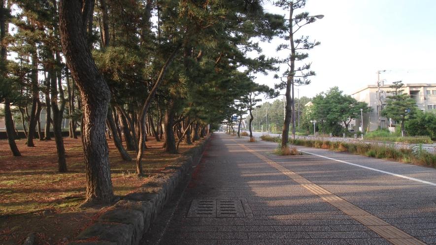 *平塚海岸への遊歩道/のどかな風景。海が近づくにつれて、潮の香りが強くなってきます。