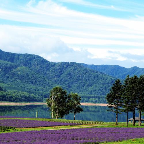 かなやま湖畔のラベンダー畑