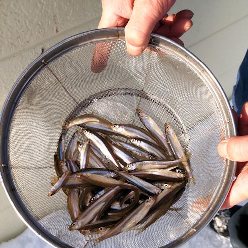 かなやま湖畔のワカサギ釣り