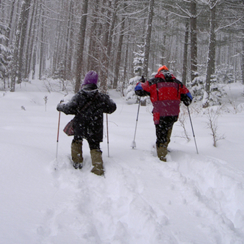ラーチ周辺でスノーシュー体験が楽しめます