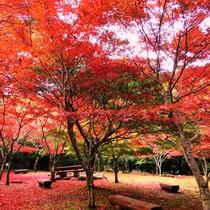 *昭和の森公園 紅葉 当館から車で17分