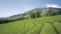 ■粟ヶ岳の茶文字と茶園